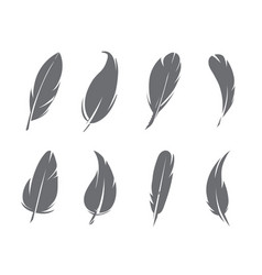 monochrome pictures of feathers isolate on white vector image