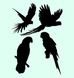 Parrots animal silhouette vector
