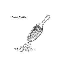 Scoop with coffee beans on the white background vector
