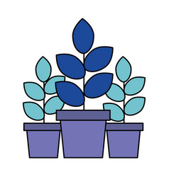 three potted plants on white background vector image