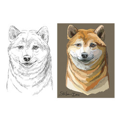Colored and black and white shiba inu portrait vector