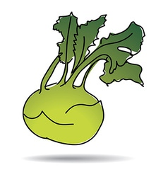 Freehand drawing kohlrabi icon vector image