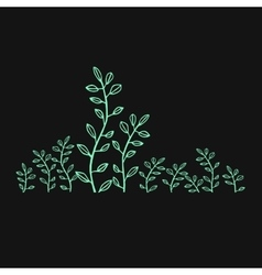 Sprouts green foliage drawing vector