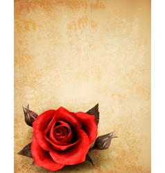 Big red rose on old paper background vector image vector image