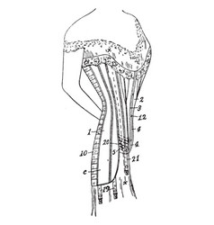 Costume corset is worn to support vintage vector