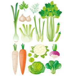 Different types of vegetables vector
