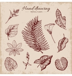 Hand Drawn Tropical Plants vector image