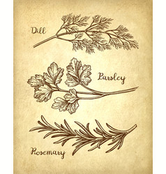 Herbs set on old paper background vector
