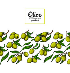olive oil label hand drawn of vector image vector image