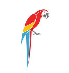 Red macaw tropical parrot on white background vector
