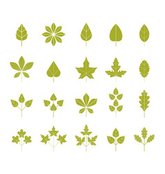 set green leaves isolated on white background vector image