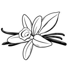 Vanilla flower and stick vector