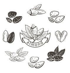 almond images set vector image vector image