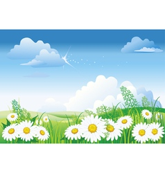 chamomile on blue sky vector image vector image