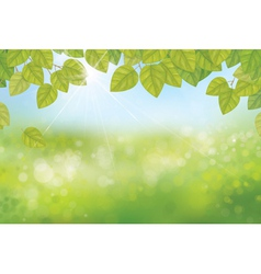 leaves spring background vector image vector image