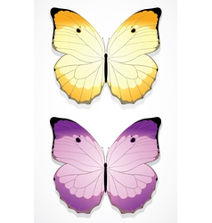 Butterflies vector