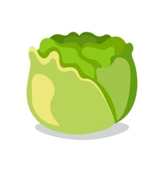 Cabbage icon in flat style Isolated object vector image