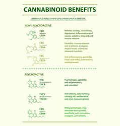 Cannabinoid benefits vertical infographic vector