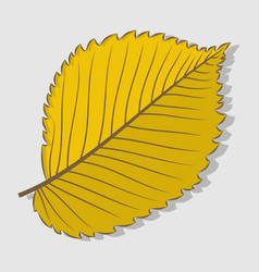 Elm autumn leaf flat design vector