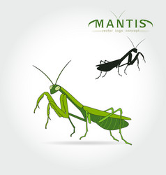 Green mantis vector