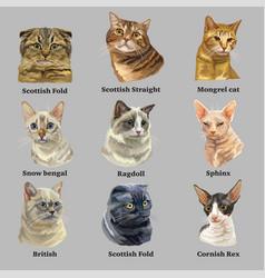 set portraits cats breeds 2 vector image