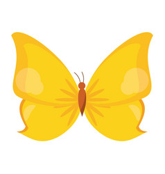 Butterfly animal insect fly vector