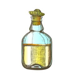 color design blank tequila bottle mexican hat cap vector image