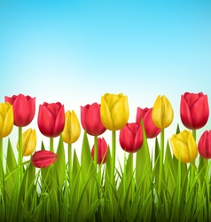 Green grass lawn with tulips on sky Floral nature vector