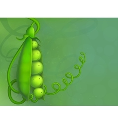 Green peas vector