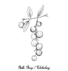 Hand drawn of bitter berries or chokecherries vector
