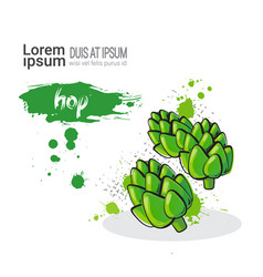 hop hand drawn watercolor vegetables on white vector image