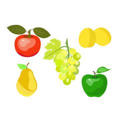 summer juicy fruit vector image