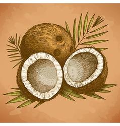 Engraving coconuts retro vector