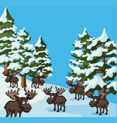 many mooses on snow mountain vector image
