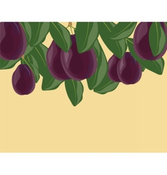 Plum fruits with leaves vector image