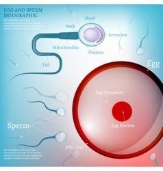 01 egg fertilization vector