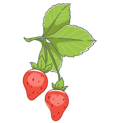 Growing strawberry with ripe berries and leaves vector