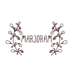 Herbs and Spices Collection - Marjoram vector image