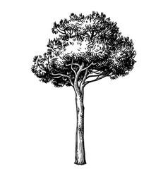 Ink sketch stone pine tree vector