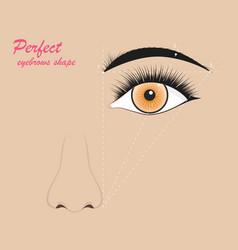 perfect eyebrow scheme banner concept ad poster vector image