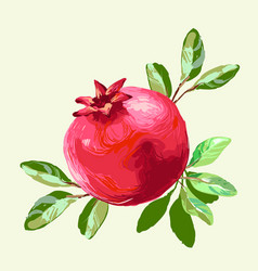 Pomegranate with leaves fresh fruit drawing vector