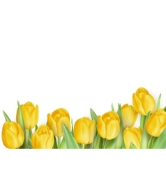 Tulip flowers as a holiday postcard EPS 10 vector image
