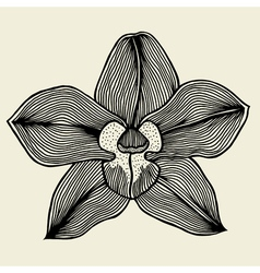 floral orchid vintage vector image