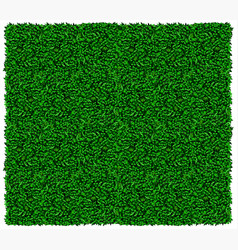 Green grape or ivy wall texture vector