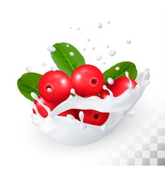 Cranberry in a milk splash on a transparent vector image vector image