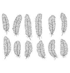 Light gray isolated fluffy bird feathers vector image vector image