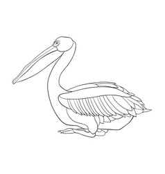 adult coloring bookpage a cute pelican image vector image