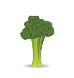 broccoli on white background vector image