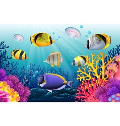 Fish swimming under the sea vector