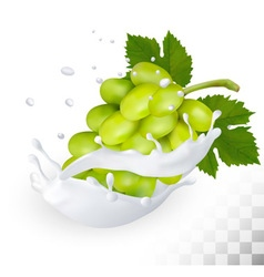 Green grape in a milk splash on a transparent vector image
